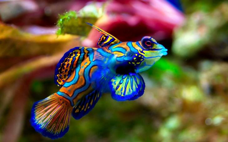Fish_design